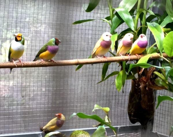 Top 10 Cửa hàng chim cảnh cung cấp giống uy tín tại Thanh Hóa