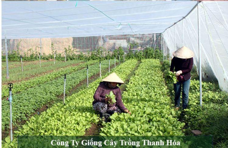 Top 10 trung tâm cung cấp giống cây trồng uy tín tại Thanh Hóa