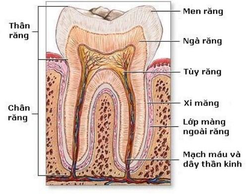 Những cách điều trị ê buốt răng hiệu quả nhất hiện nay